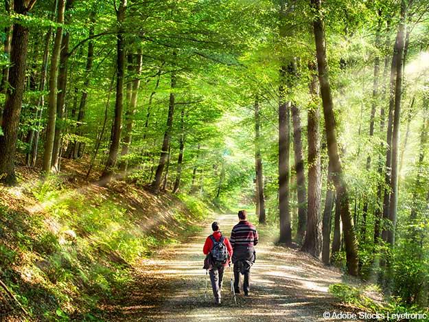 Waldbaden: Prävention und Therapie