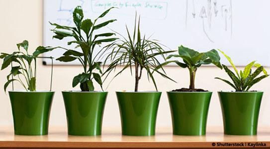 Etwas gr nes braucht der mensch for Pflanzen innenraum